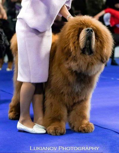 INTERNATIONAL DOG SHOW FCI-CACIB