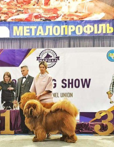 Lutsk, UKRAINE 09.03.2019-10.03.2019 еxhibitions