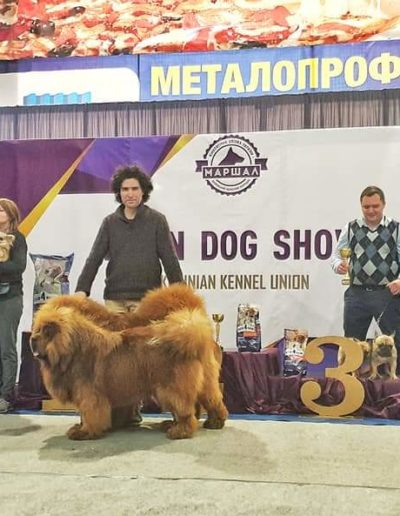 photo tibetan mastiff dog