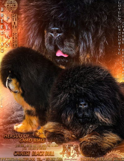 puppies breeding plan 2019-2020